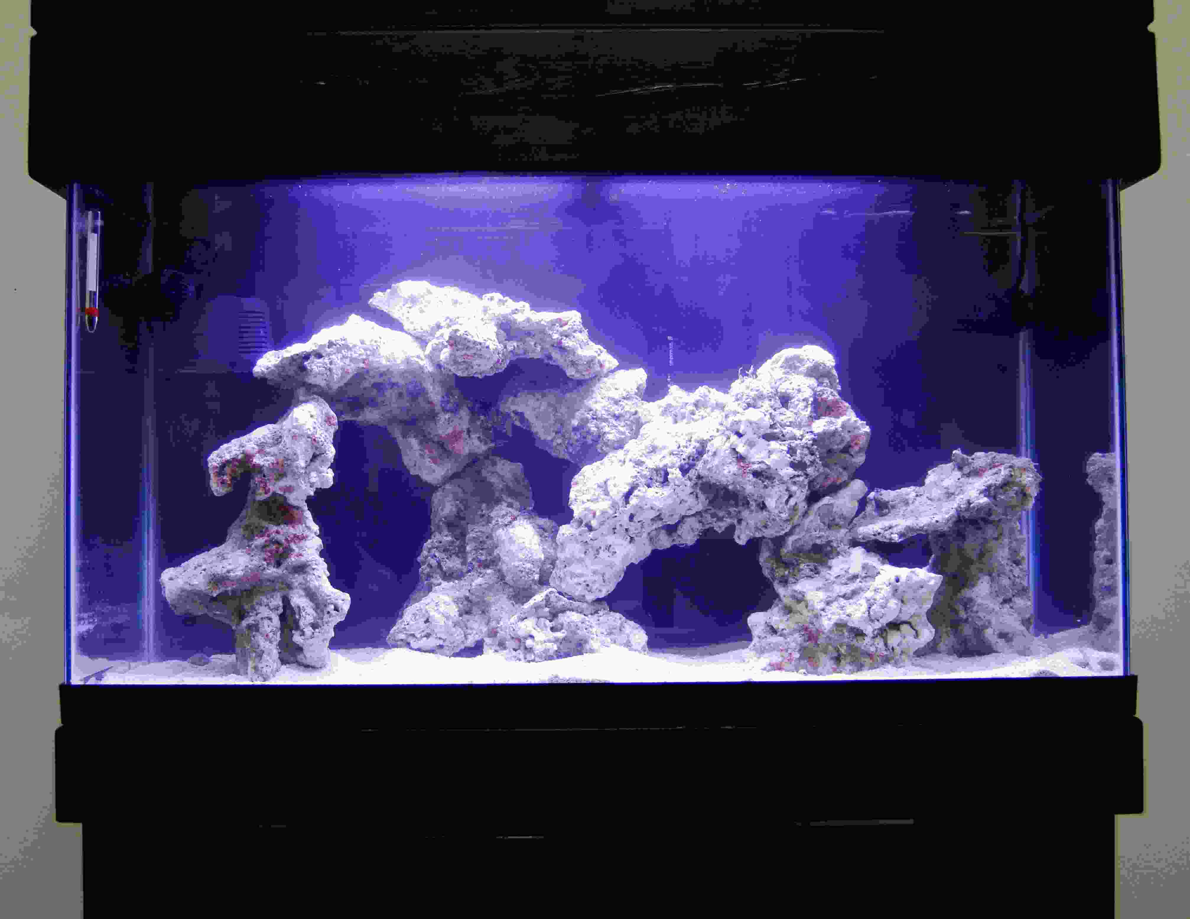 Amtra Resin decoration REEF ROCK BRANCH MD 1