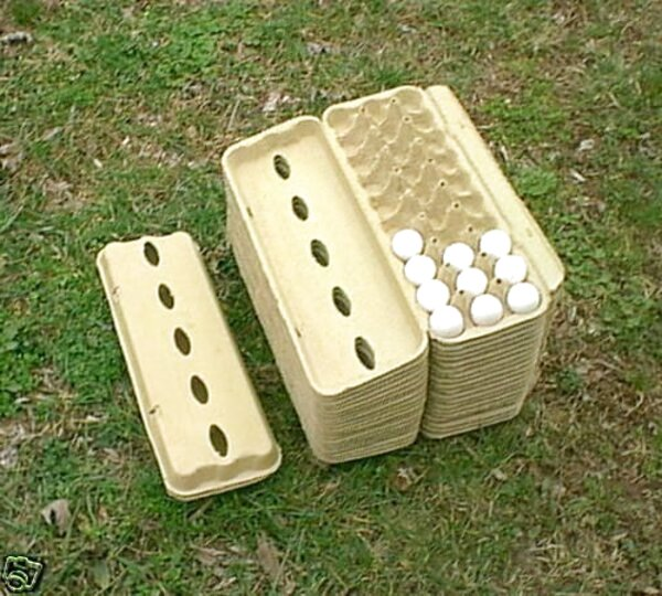 quail egg boxes for sale